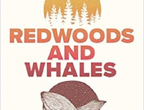 Book Review: 'Redwoods and Whales: Becoming Who You Actually Are' Phil Joel